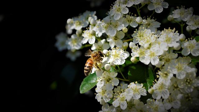včela na květech.jpg